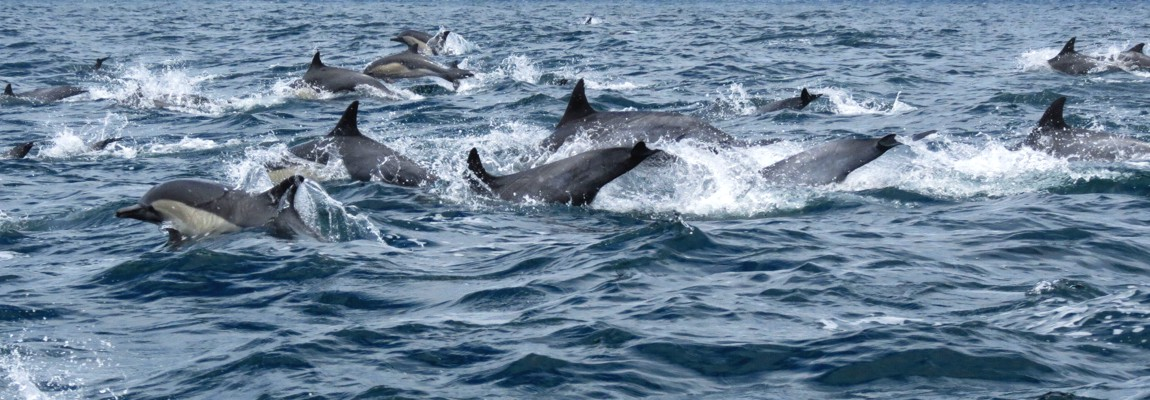 Dolphin watching and wildlife sea tour